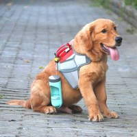 Магазин товаров для животных – как порадовать любимца