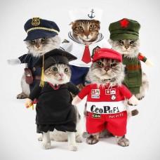 Костюмчик для кота